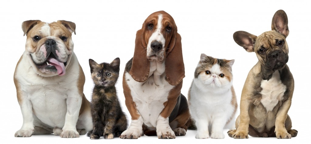 Pets-in-a-row-1024x474